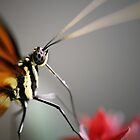 Feeding Butterfly by shuttersuze75