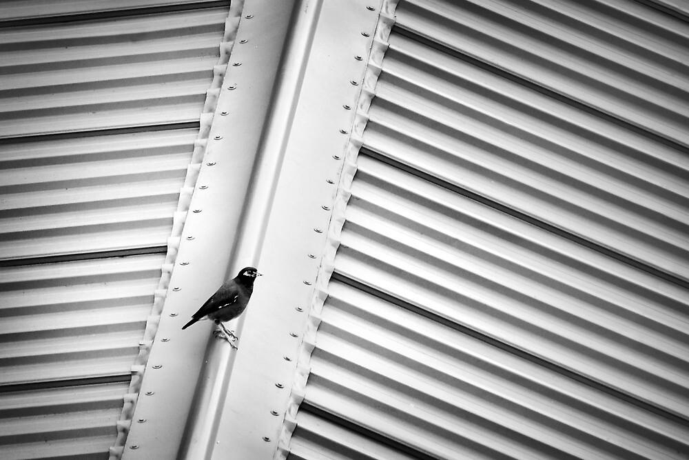 Bird on a Hot Tin Roof by shuttersuze75