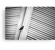 Bird on a Hot Tin Roof Canvas Print