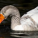 Goose Foraging by Joe Jennelle