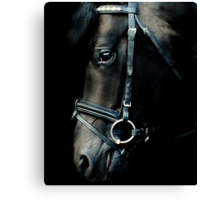 The black stallion Canvas Print