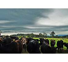 The Farm Photographic Print