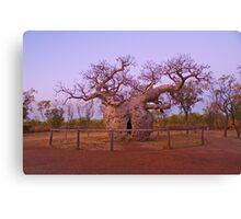 Boab Tree, Kimberley, WA Canvas Print
