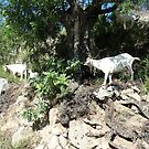 Goats at the roadside by Fay  Hughes