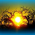 Sunset through a tree silhouette by ©The Creative  Minds