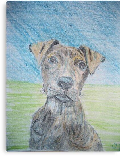 Puppy Portrait by GEORGE SANDERSON