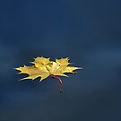 October loneliness by Bluesrose