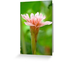 The Garden 8 - Ginger Torch Lily Greeting Card