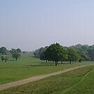 Treeline by Lennox George