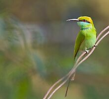 Green Bee Eater by upadhyay