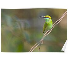 Green Bee Eater Poster