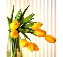 Still life in yellow tulips Photographic Print