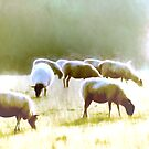 Grazing by shalisa