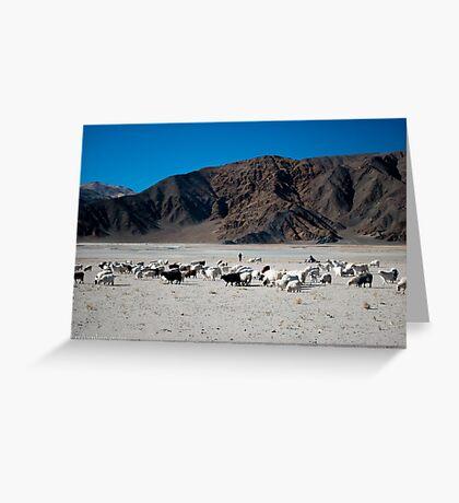 pashmina sheep Greeting Card