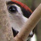 Woodpecker Closeup I by ArtOfE