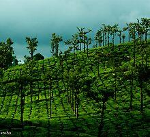lush green tea estate by vishwadeep  anshu