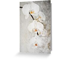 Wall Orchid Greeting Card