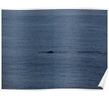A Humpback Whale in the early Morning - Una Ballena Jorobada en la Mañana Poster