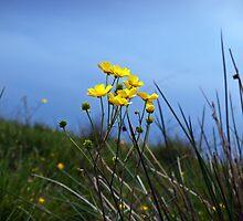 Buttercups In The Meadow by Paul Barnett