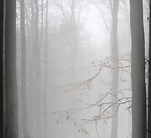 misty forest II by Iris Lehnhardt