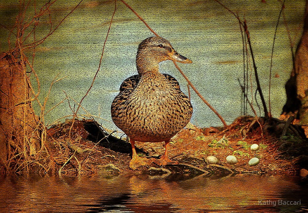 Mother Mallard With Eggs In The Cypress Swamp by Kathy Baccari