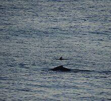 Whale And Dolphin - Ballena Y Delfin by Bernhard Matejka