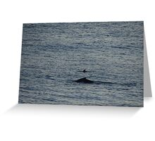 Whale And Dolphin - Ballena Y Delfin Greeting Card