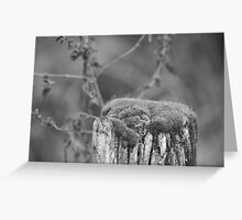 Moss on the Mill Greeting Card