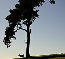 Lone tree on Raddon Top by peteton