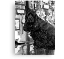 Small Town Pets 1 Canvas Print