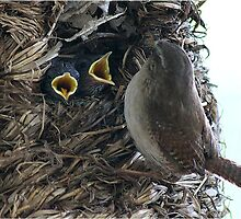 Maaaam!   Baby wrens by Rivendell7