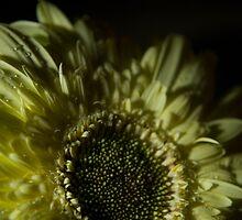 Daisy by Sami Mick
