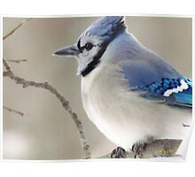 The Blue Jay Poster