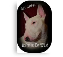 Bull Terrier born to be wild Canvas Print