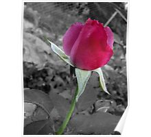 Rose on Gray Poster