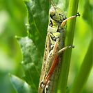 iphone Grasshopper by Éilis  Finnerty Warren