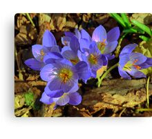 In the Garden of Michelham... The Beauty of a Crocus. Canvas Print