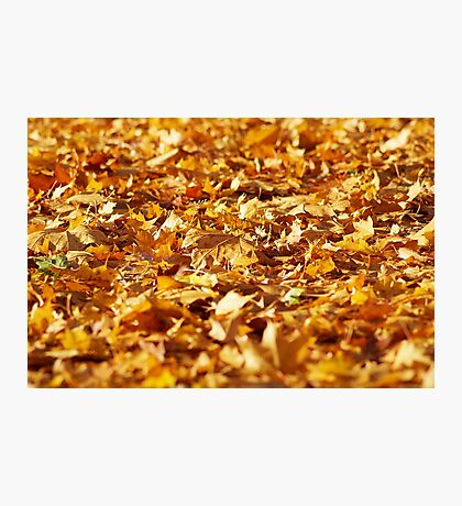 golden foliage autumn leaves Photographic Print