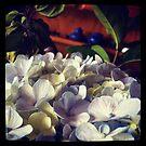 Hydrangea by Marita