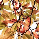Backlit Colour by Ellesscee