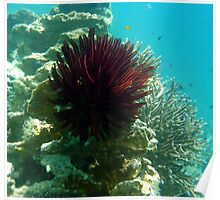 RED FEATHER STAR Poster