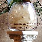 """From small beginnings..."" by Marjorie Wallace"