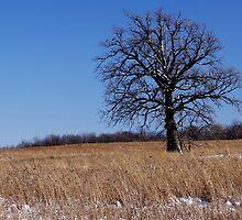 Whitened Oak by hubcap