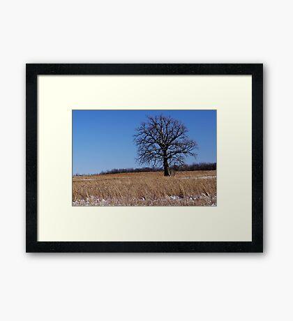 Whitened Oak Framed Print