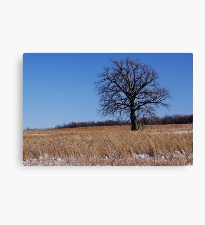 Whitened Oak Canvas Print