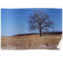 Whitened Oak Poster