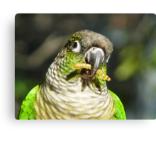 Greenie, The Friendly Parrot Canvas Print