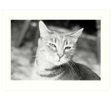 Calvin Cat Art Print
