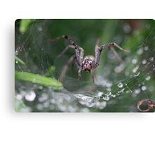 Spider? Canvas Print