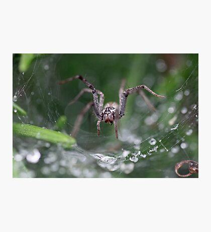 Spider? Photographic Print